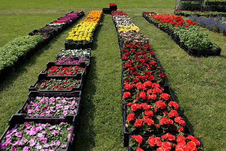 Fresh-cut Flowers from Colombia by Air are Big Business for U.S.