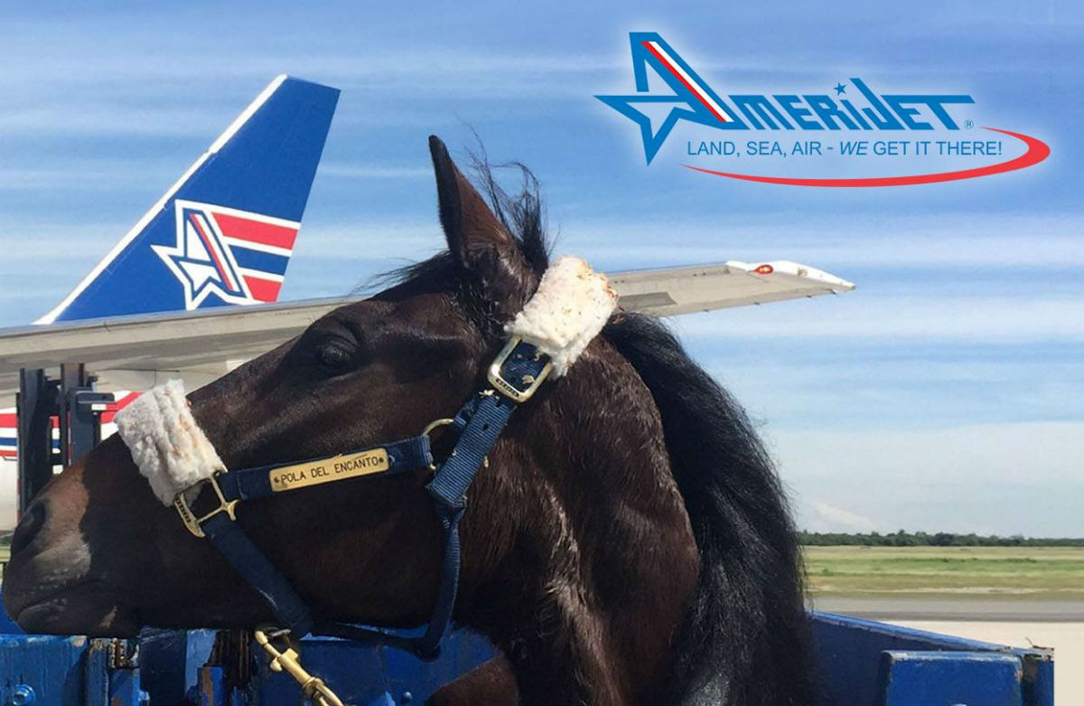 Amerijet Safely Transports Your Livestock and Other Animals to Amerijet Destinations